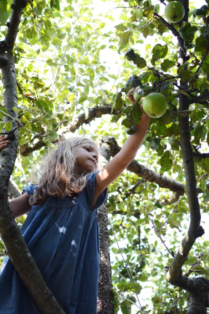 Ivy picking
