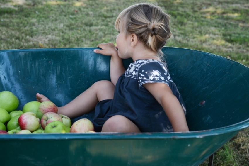 Marlow in wheelbarrow