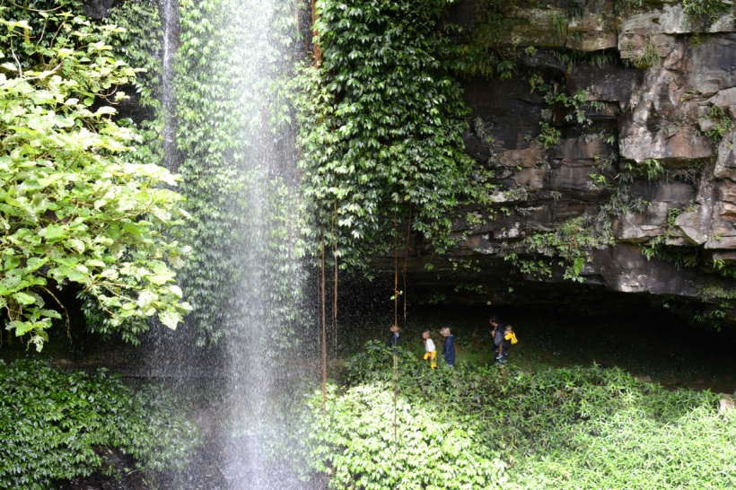 waterfall in dorrigo