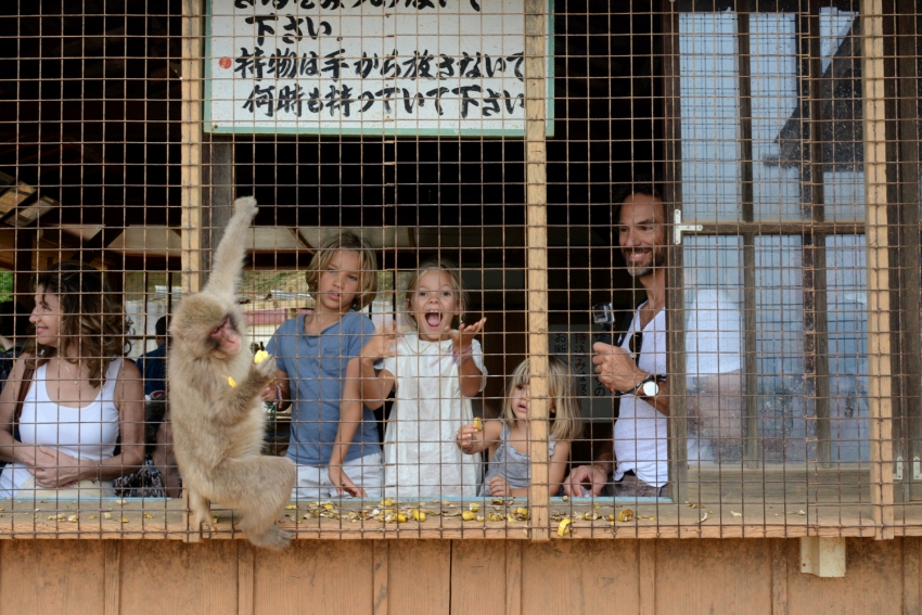 feeding monkeys in monkey park