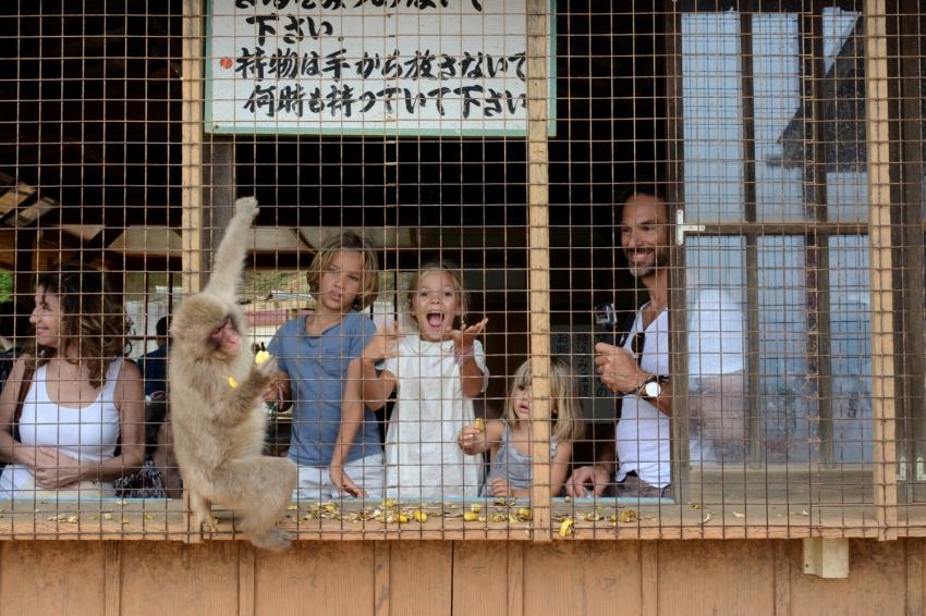 feeding monkeys in monkey park