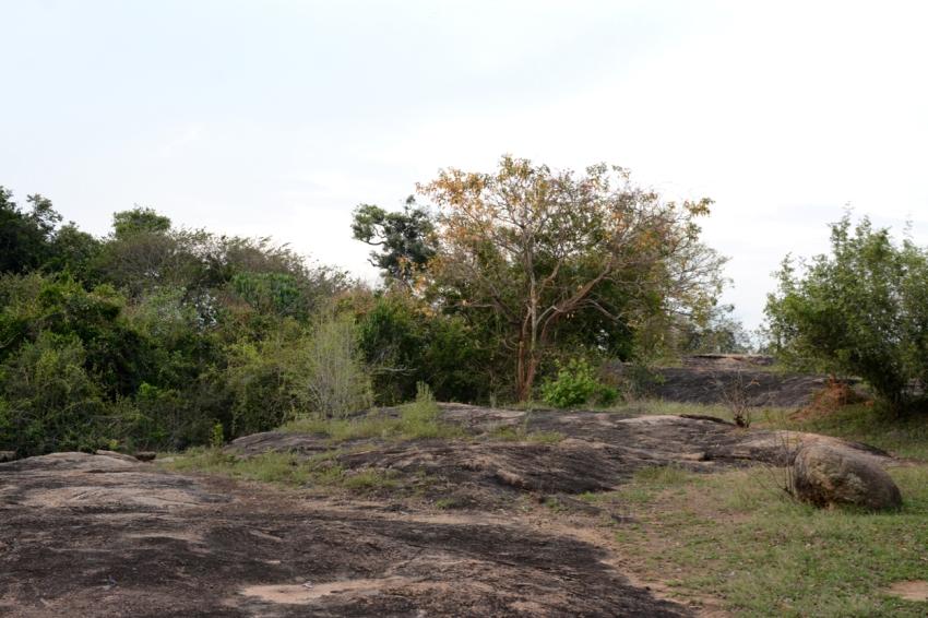 jungle in arugam bay