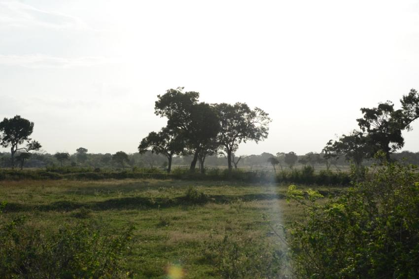 tree in jungle