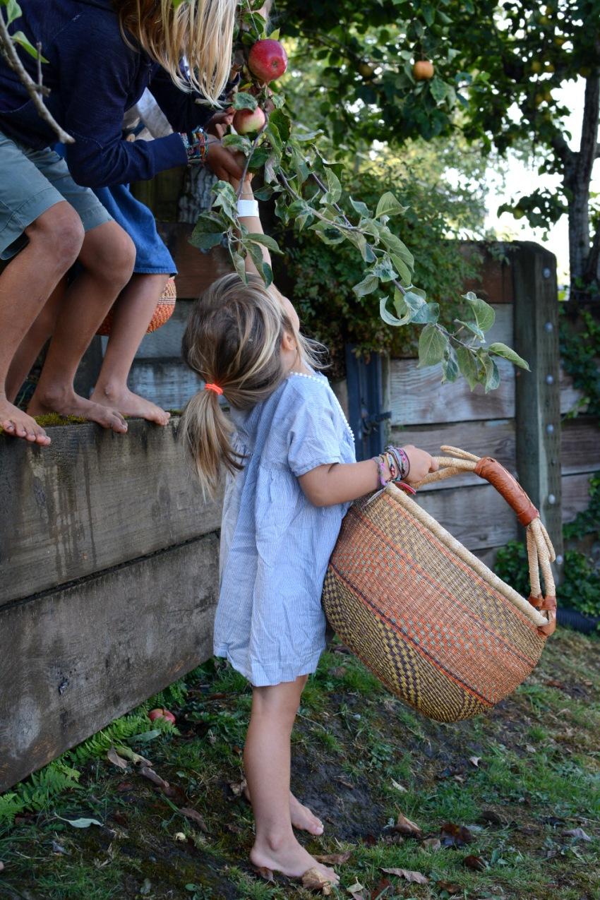 kids helping Marlow pick apples