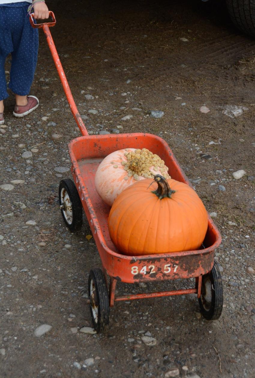 wagon-with-pumpkins